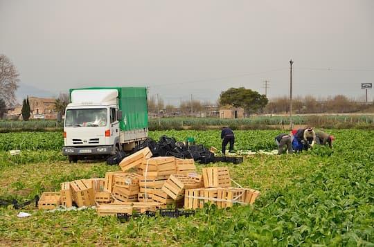 plantilla-variable-trabajadores-del-campo